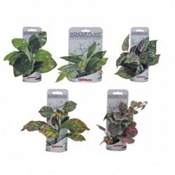 WONDER PLANT SERIES B 15-18 cm