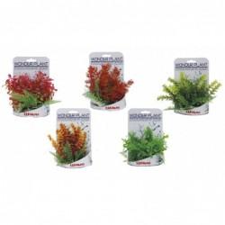WONDER PLANT SERIES C 15-18 cm