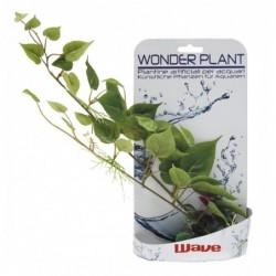 WONDER PLANT SERIES D 25-40 cm