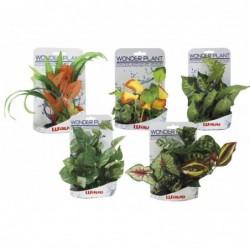 WONDER PLANT SERIES E 15-25 cm