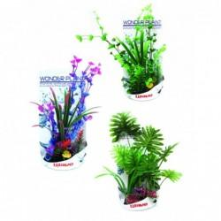 WONDER PLANT SERIES H 30-35 cm