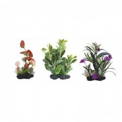 AMAZING PLANT SERIES B...