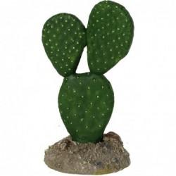 Mexican Elder Cactus