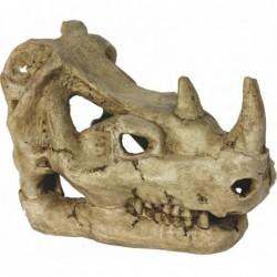 Rhinoceros Skull