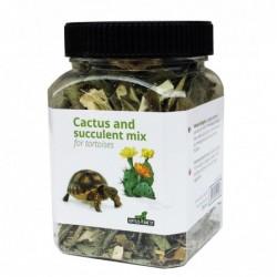 Cactus and succulent mix...