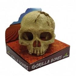 Gorilla Bones