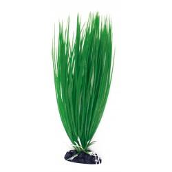 PLANT CLASSIC ACORUS