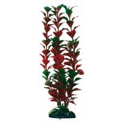 PLANT CLASSIC LUDWIGIA