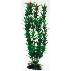 PLANT CLASSIC EGERIA...