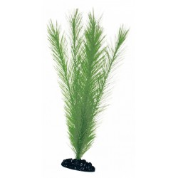 PLANT CLASSIC BLYXA