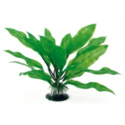 PLANT CLASSIC ECHINODORUS